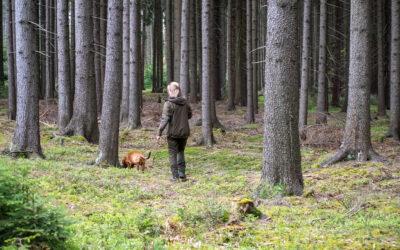 Výsledky Lesních zkoušek Bezděčí – Unerázka