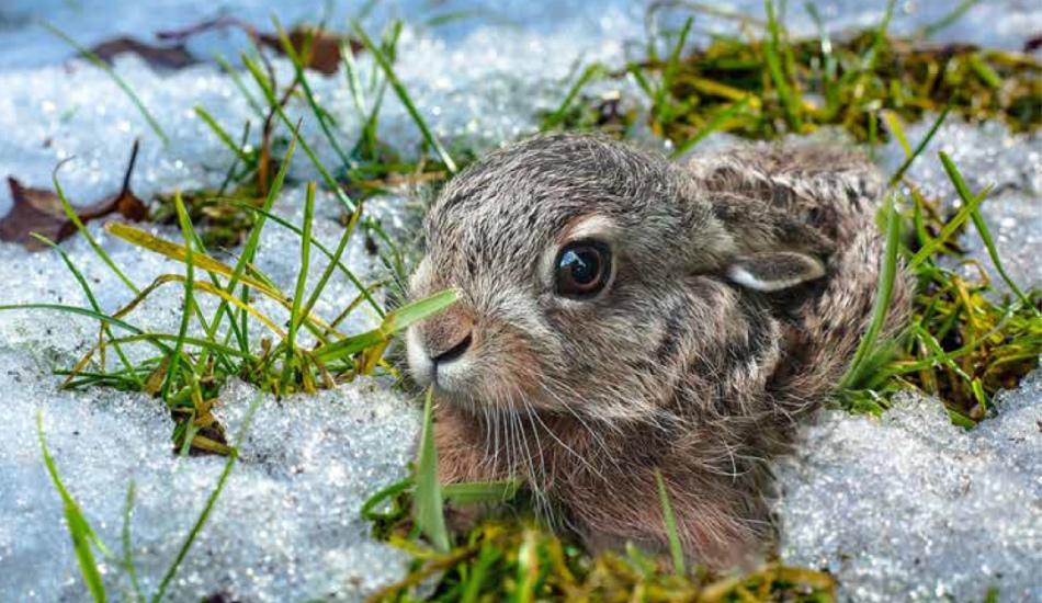 Nalezená mláďata nechte v přírodě, poradí si